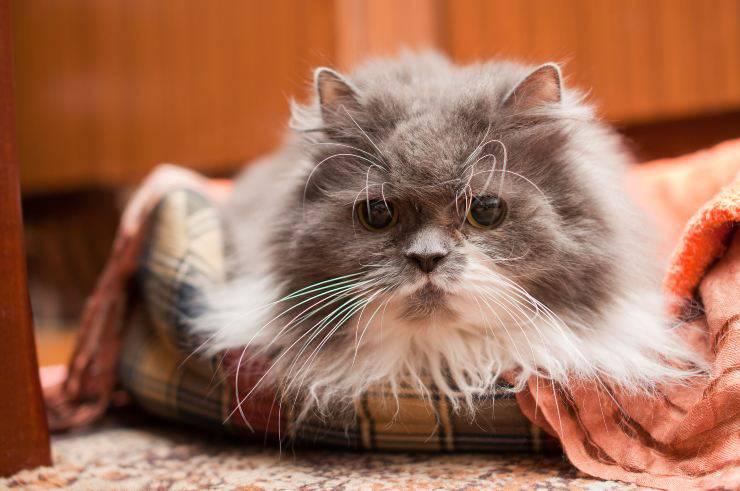 emergenze gatto anziano