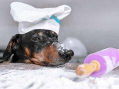 farine adatte ai cani