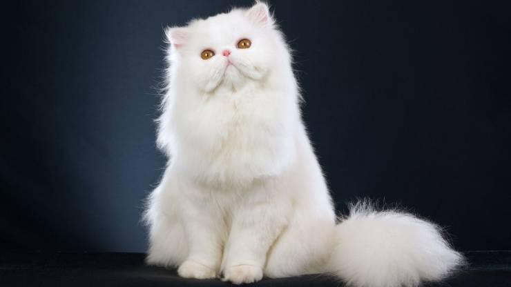 gatto famosi vip gatti star