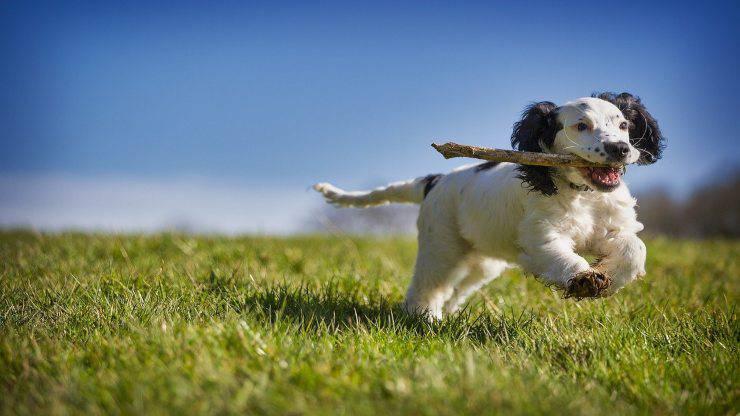 Cane mangia pezzi di legno