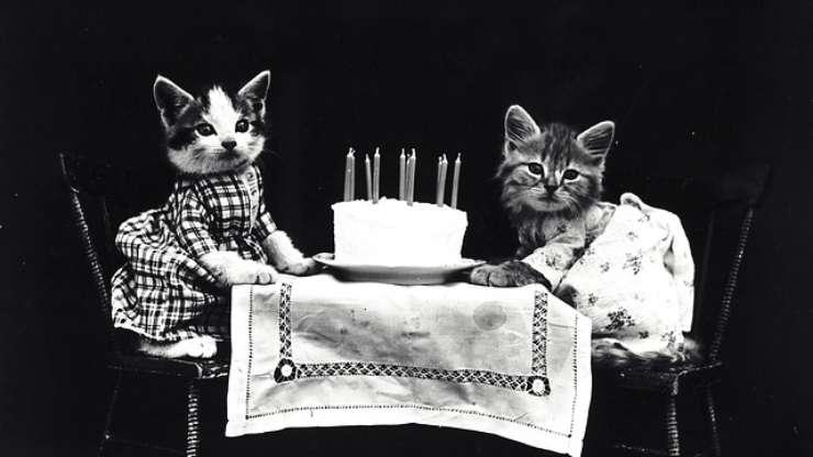 gatti a tavola