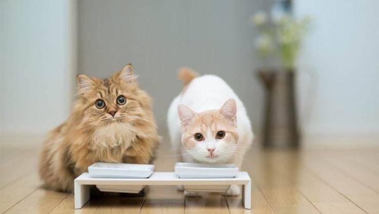 gatti che mangiano
