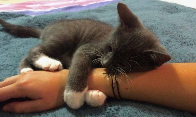 gattino abbraccia mano