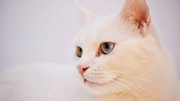Perché il gatto ci fa i dispetti