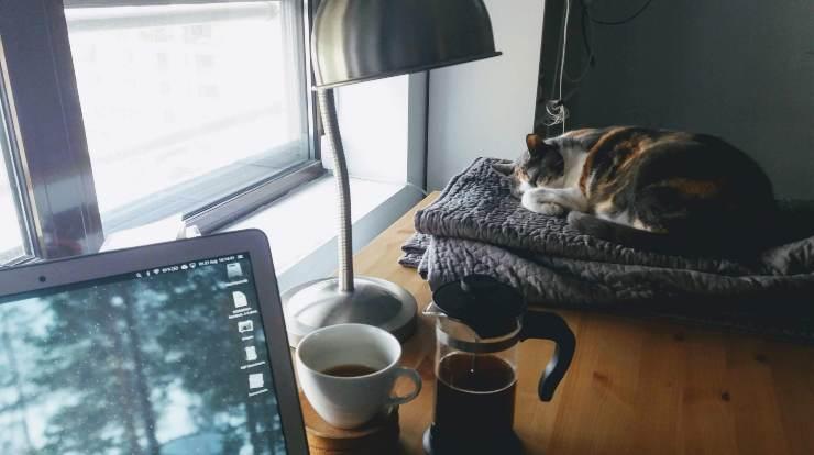 gatto dorme su tavolo