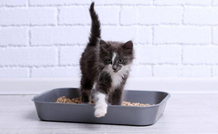 gatto ha fatto i bisogni
