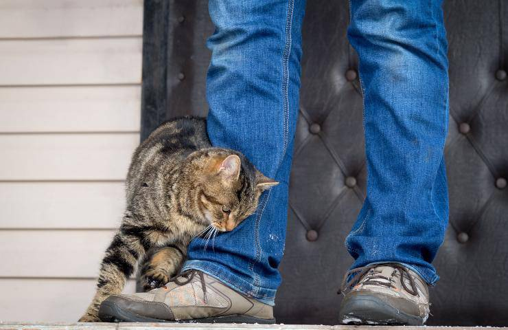 gatto lecca vestiti