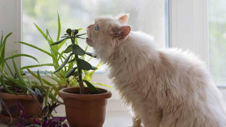 gatto mangia le piante