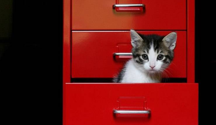 gatto nel cassetto