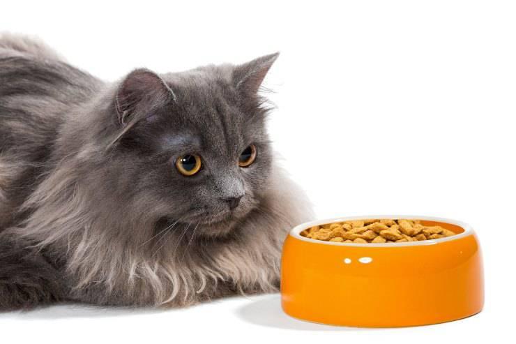 alimentazione gatto persiano