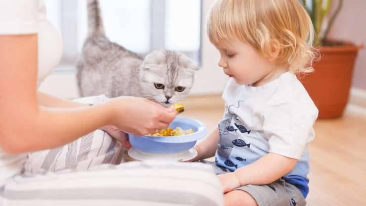 gatto puo mangiare omogeneizzato