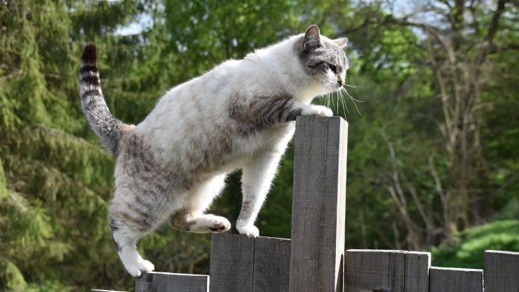 Che cos'è il Cat Agility