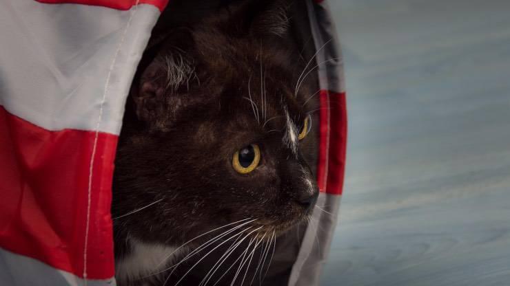 Tunnel Cat Agility