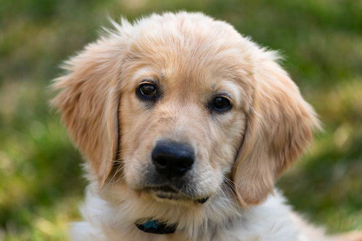 Razze canine adorabili