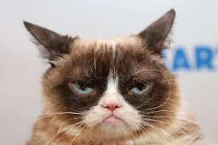 I gatti più ricchi del mondo: Grumpy Cat