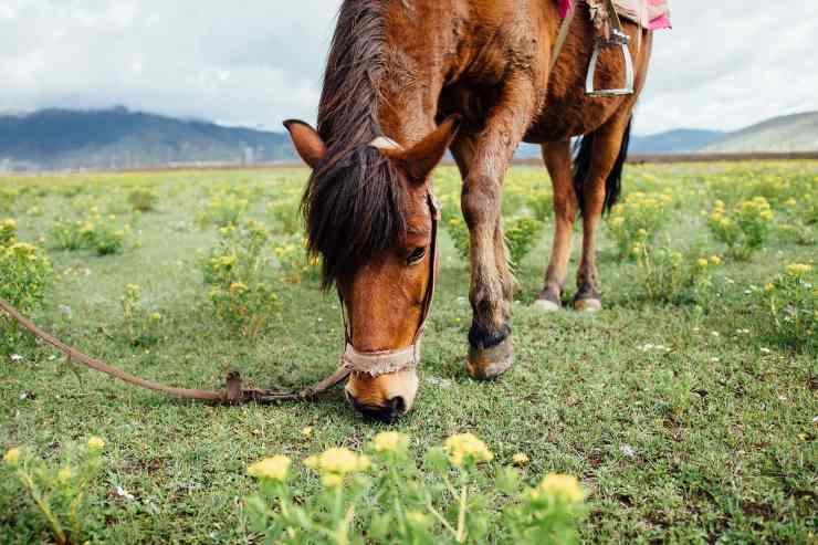 Il cavallo e la dieta corretta