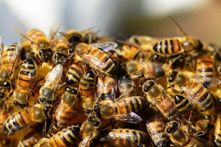 apicoltore ape regina pugno