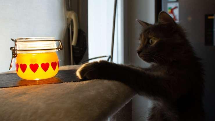 i gatti possono mangiare il miele