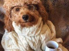 il cane può bere tè