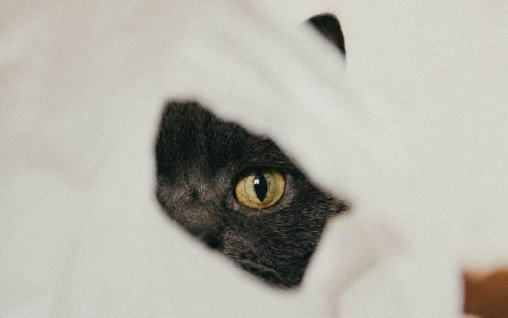 il gatto e la passione per la carta