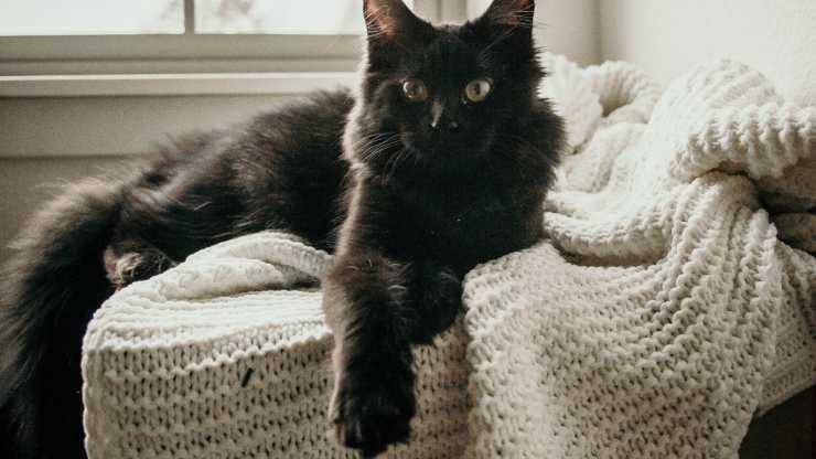 il gatto graffia le coperte