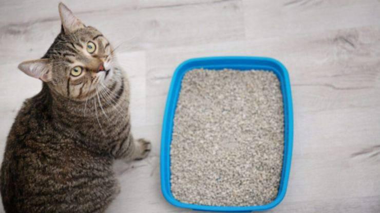 il gatto e la lettiera
