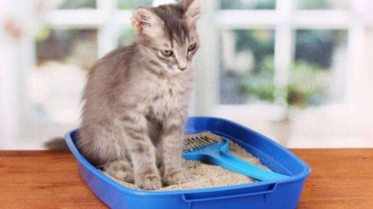 il gatto non fa pipì sintomi