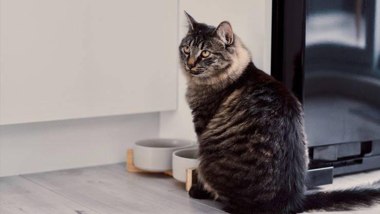 il gatto può mangiare la curcuma