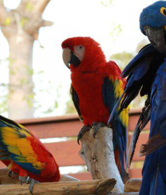 il pappagallo più grande del mondo