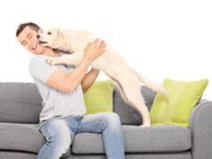 saluto del cane