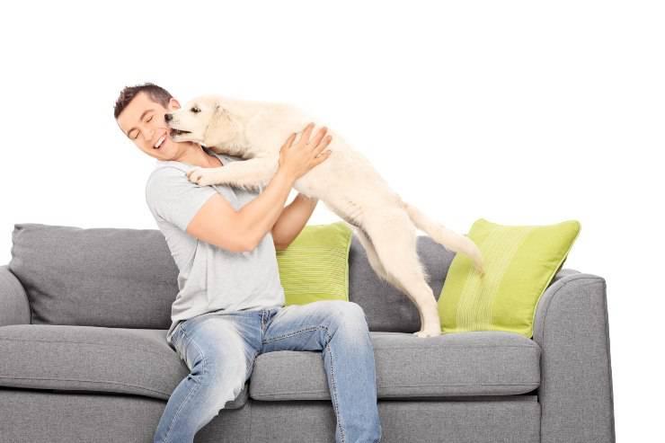 il saluto del cane