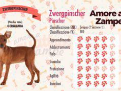infografica cane Zwergpinscher pinscher nano