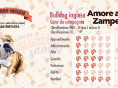 infografica cane bulldog inglese new