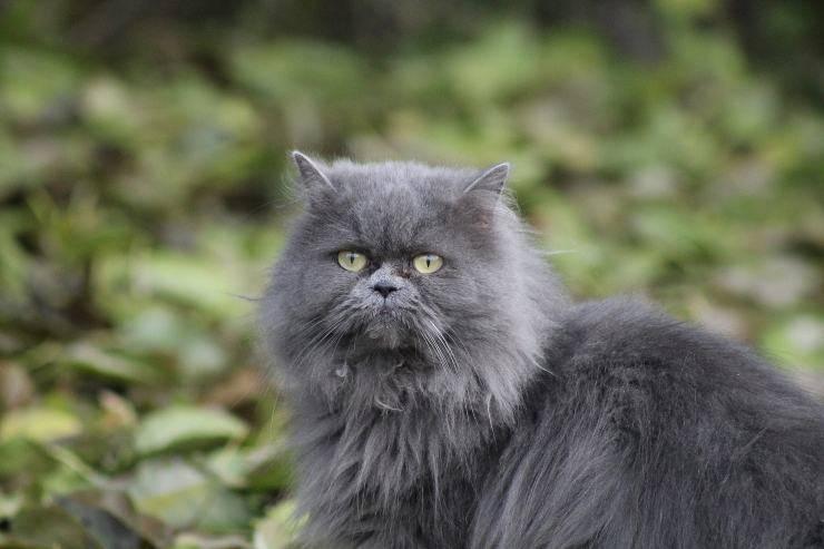 Bellezza nel gatto
