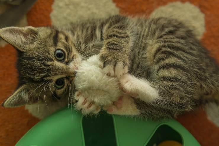Il gatto adora i giocattoli