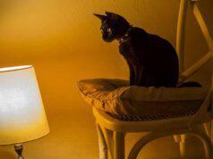 lasciare la luce accesa per il gatto