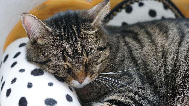 malattie psicologiche gatto