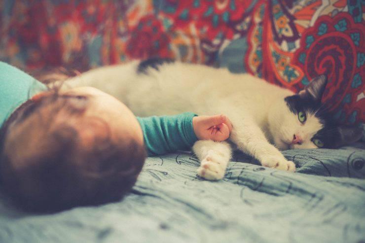 Il gatto soffia al bambino