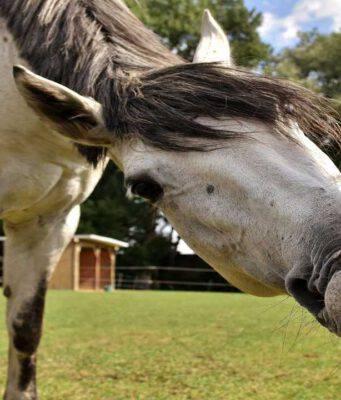 Il cavallo e il cibo
