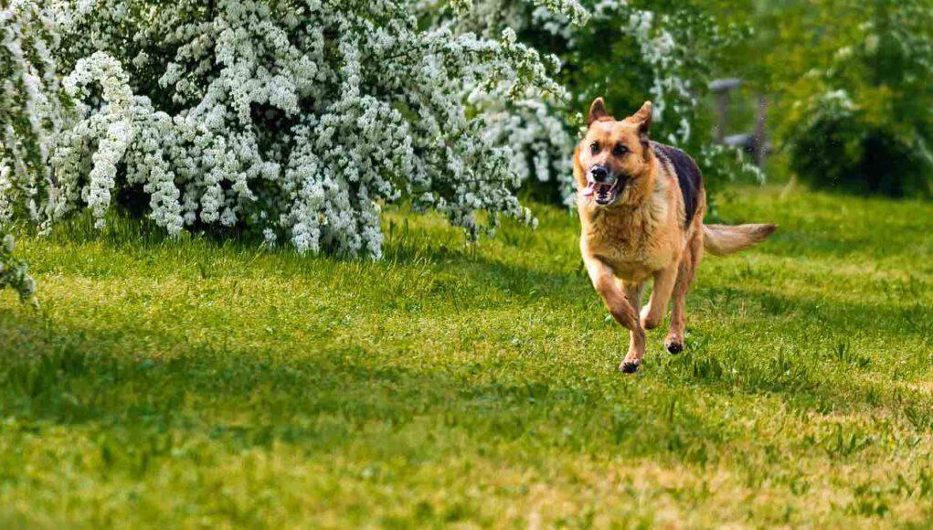 Canicross col cane