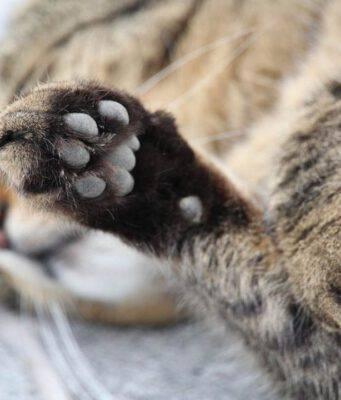 Il gatto e le sue zampe
