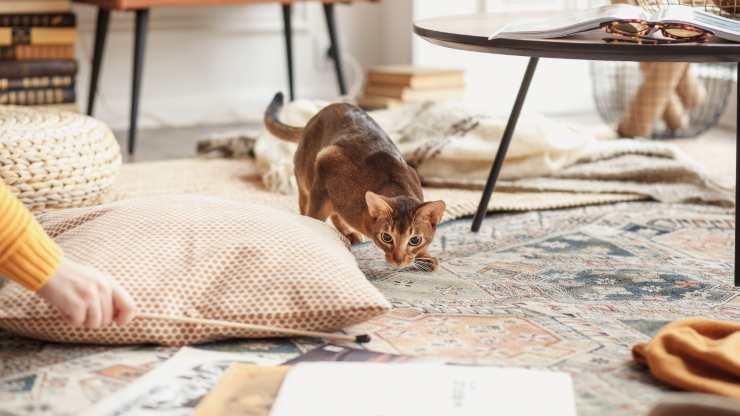 perche gatto nasconde cose