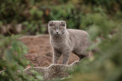 Il gatto e i topi