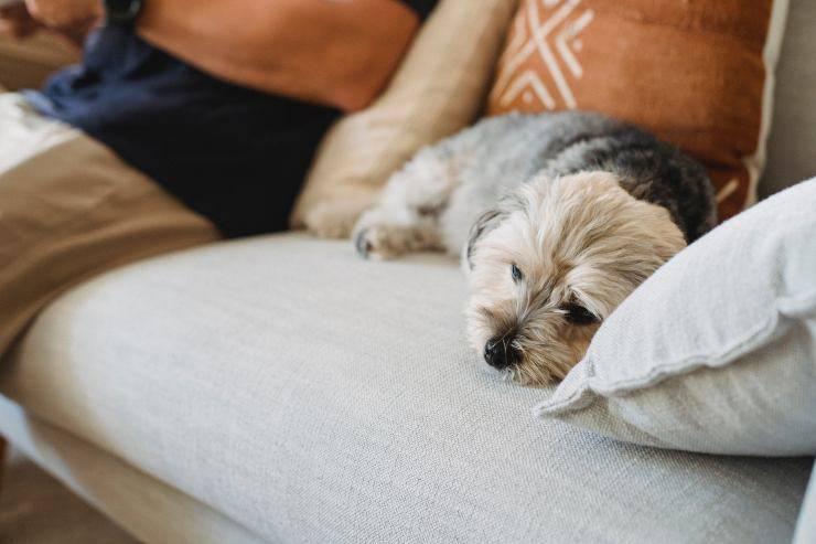 La tristezza nel cane