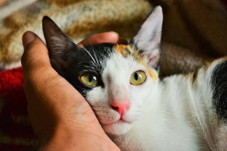 Le patologie nel gatto