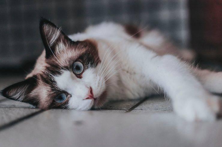 Gatti molto carini
