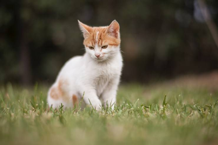 Il gatto e i suoi bisogni