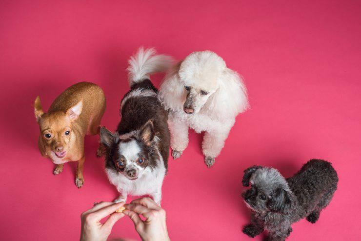 Le razze canine più tenere
