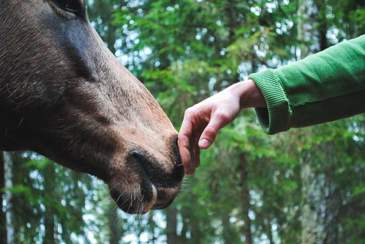 Il cavallo e il suo atteggiamento