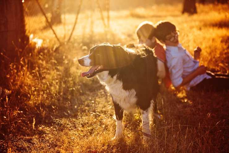 Il sole per il cane